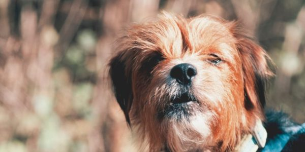 Canine Crèche Groupwelcomes new Dog Walking Code