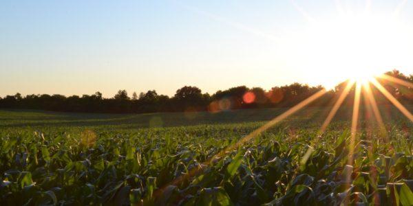 Farmers evening